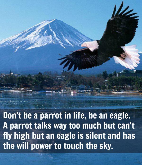 7 principles of eagles signature success